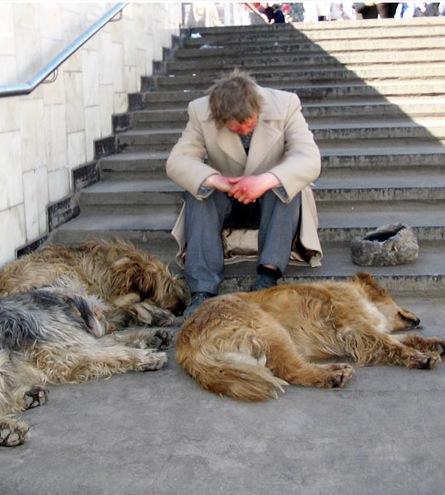 Усыпить собаку на дому первомайская